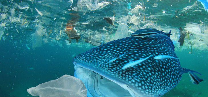 Les pays du G20 s'accordent pour réduire les déchets plastiques en milieu marin